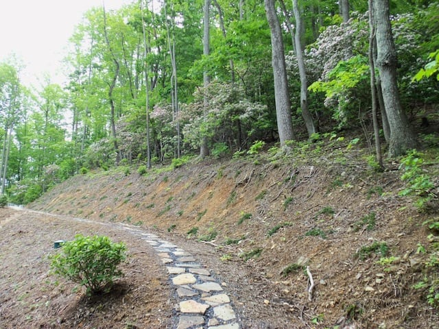 mountain_laurel_path_spring2013