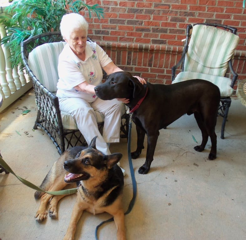 Mother and Dogs