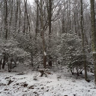 snow030416a