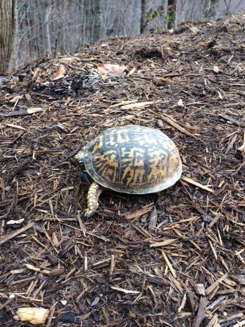 turtle_Feb2018