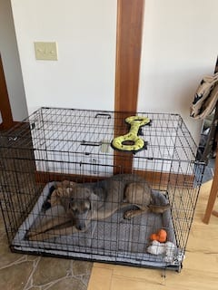 Caring for a foster dog