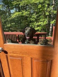 Adopting a foster dog